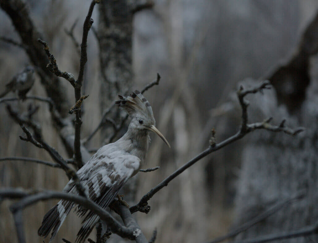 Screening now: Gerard Byrne's 'Jielemeguvvie guvvie sjisjnjeli [Film Inside an Image]'
