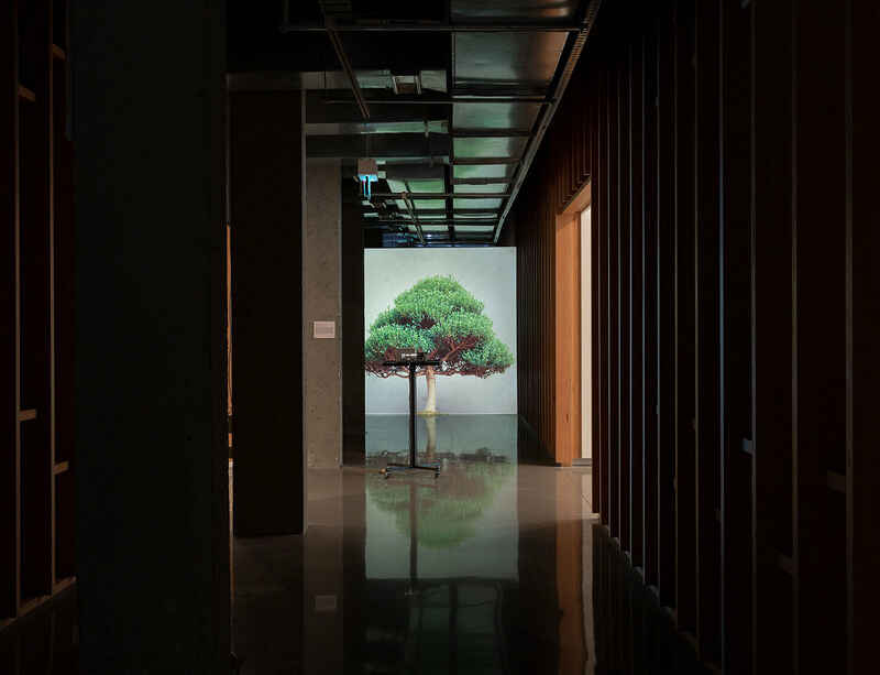Tree Story at Monash University Museum of Art features Ceal Floyer's installation Overgrowth